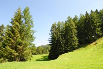 Roda dles Vilès, luminous meadow