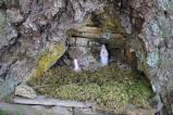 Little shrine, where the mushrooms are...