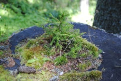Small garden on the path to Armantara