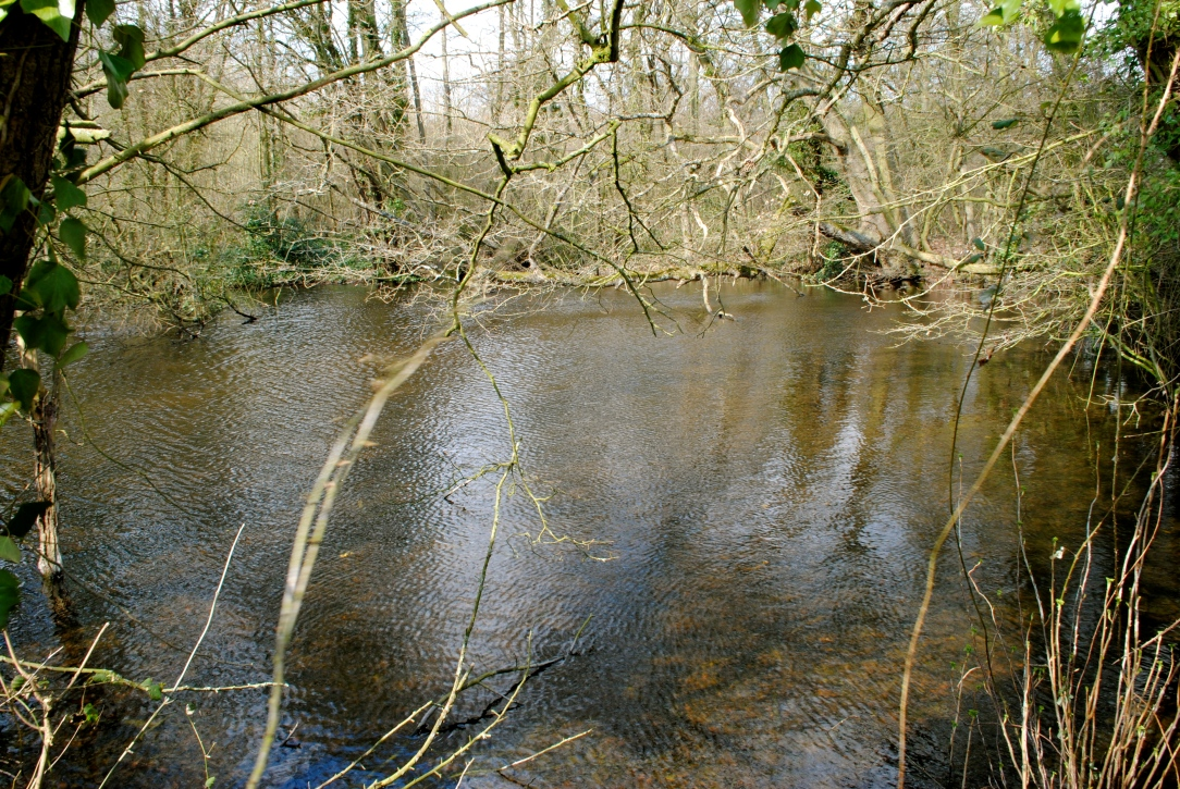 pond, near Birling