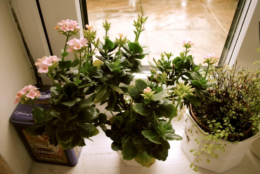 Winter garden (1)